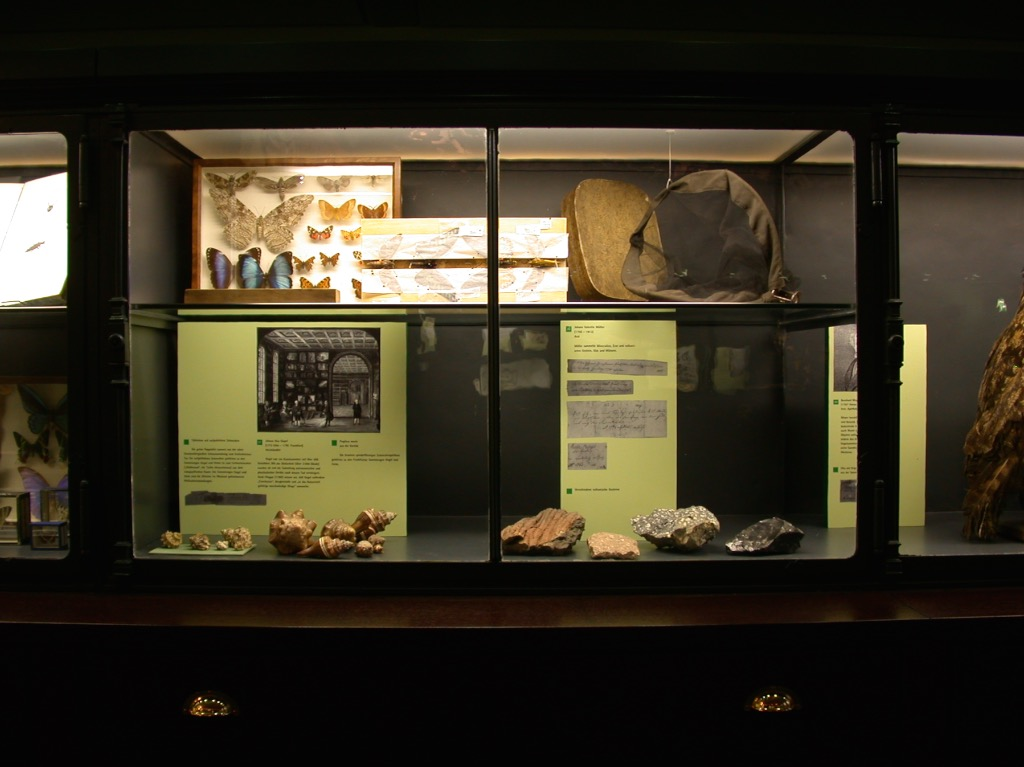 senckenberg museum homepage